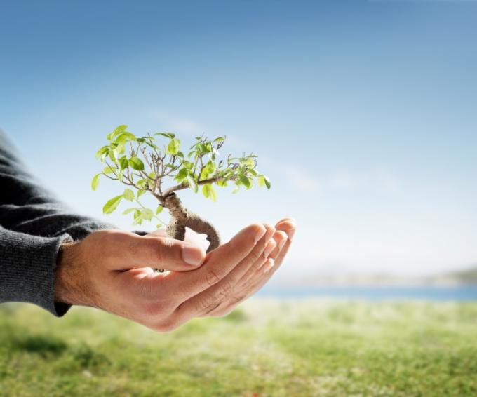 treehandgrowth